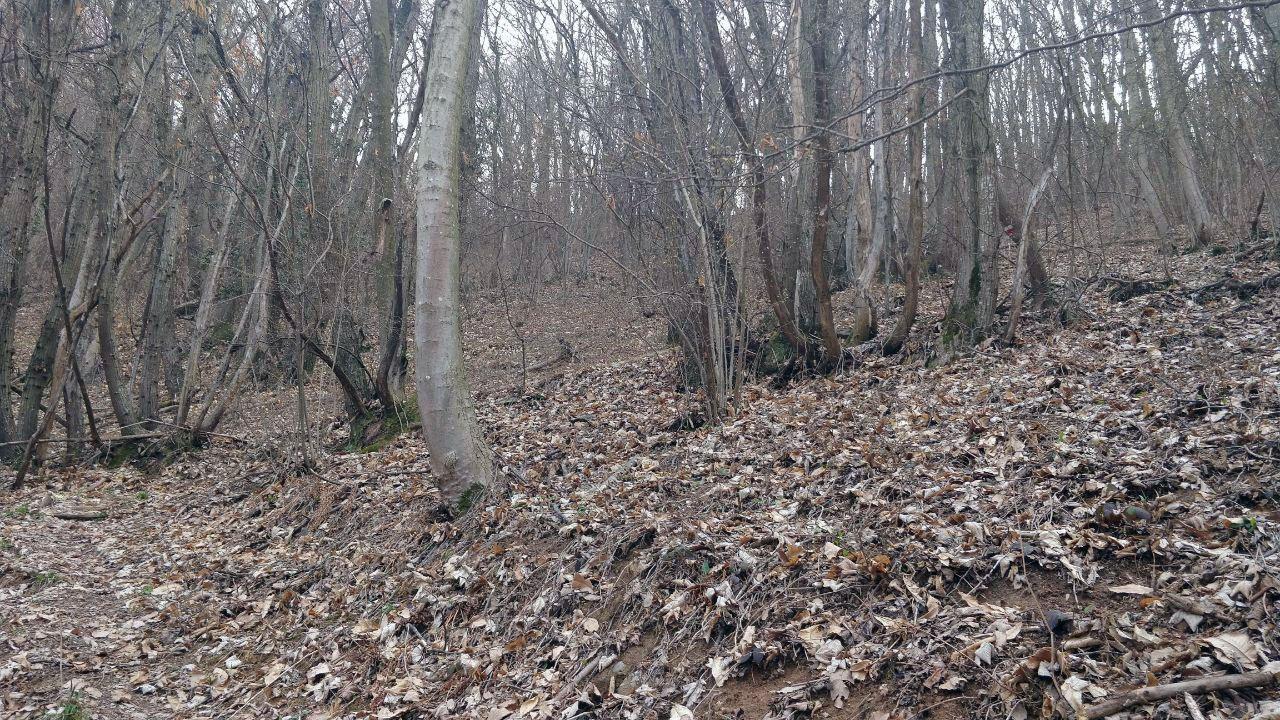 Bosco autunnale con foglie